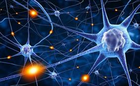 """Resultado de imagen para neuronas"""""""